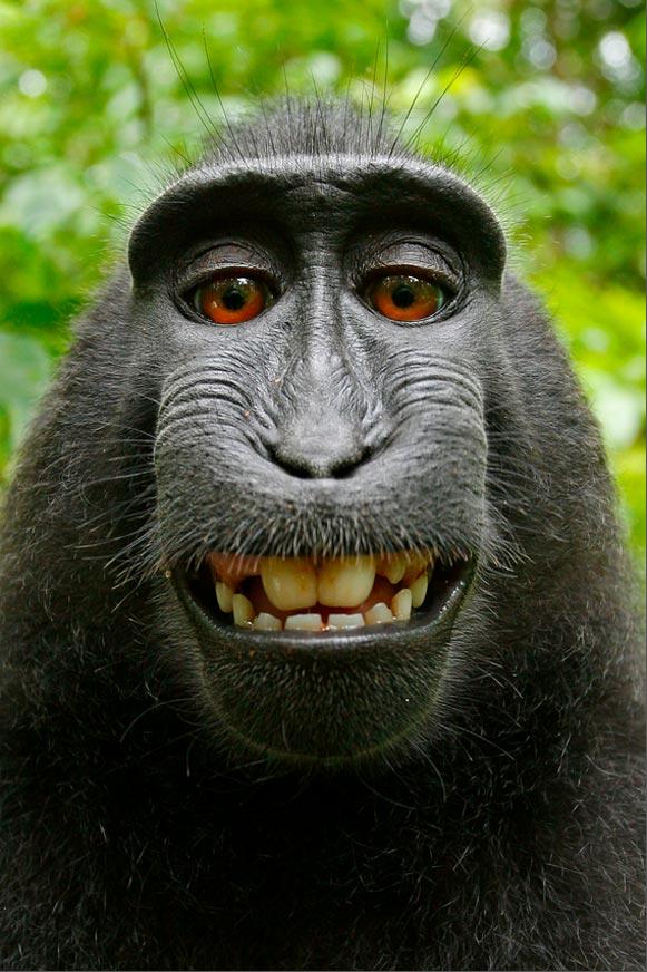 Selfie tomada por un mono en Indonesia